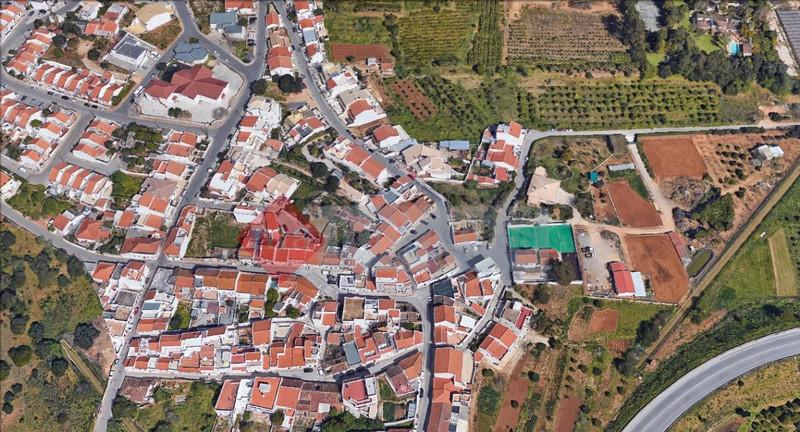 1000011041_figueira.jpg