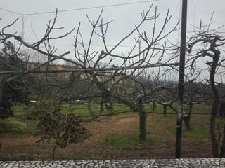 Quinta V3 São João da Madeira - equipada, bbq, árvores de fruto, garagem