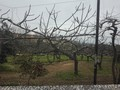 Quinta V3 São João da Madeira para vender - equipada, bbq, árvores de fruto, garagem