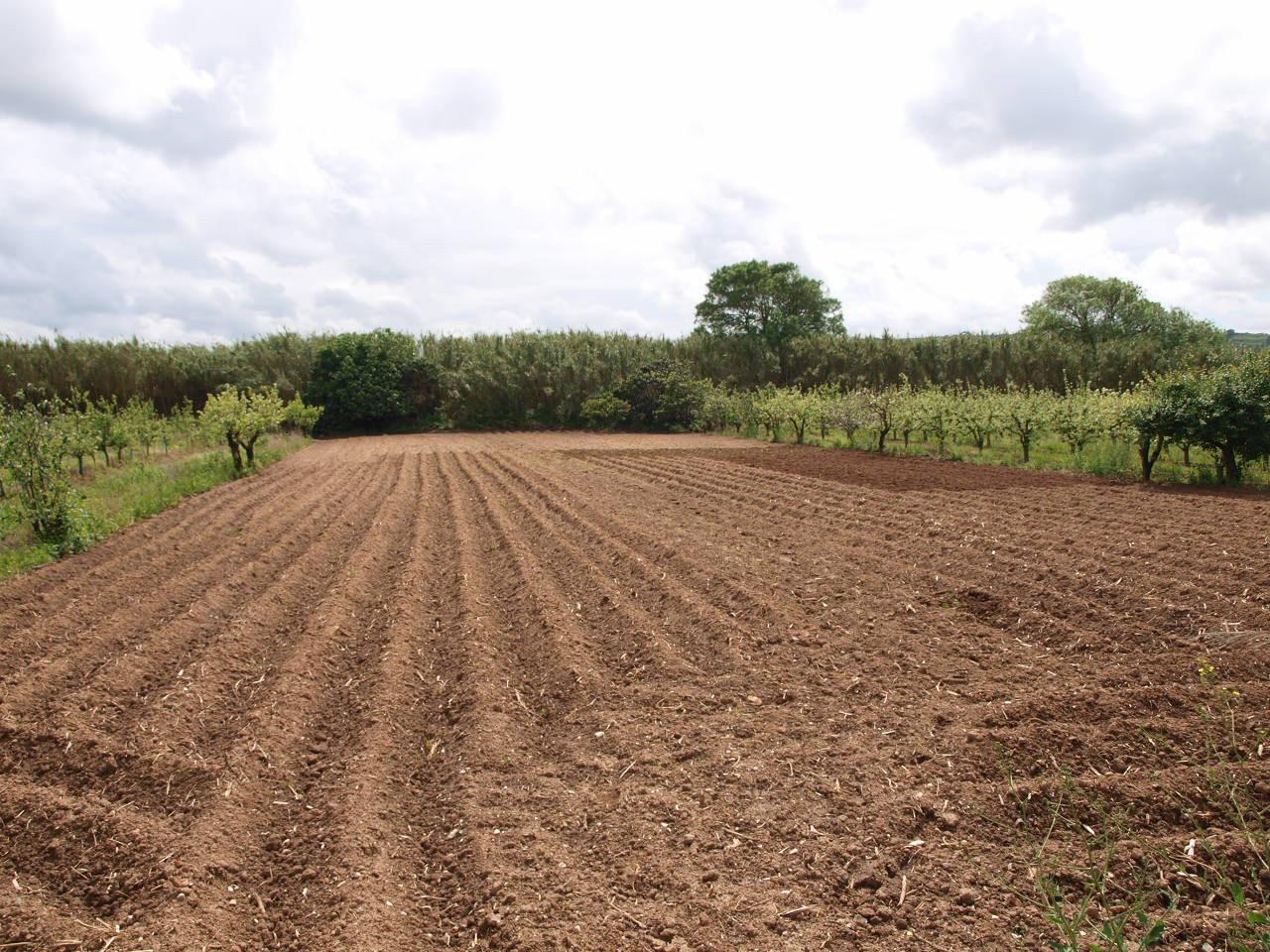 Terreno r stico com 60m2 bidos santa maria bidos cp for Legalizar casa en terreno rustico