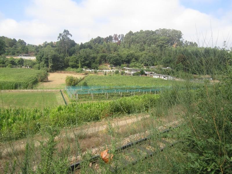Terreno Rústico com 4480m2 Casaldelo São João da Madeira