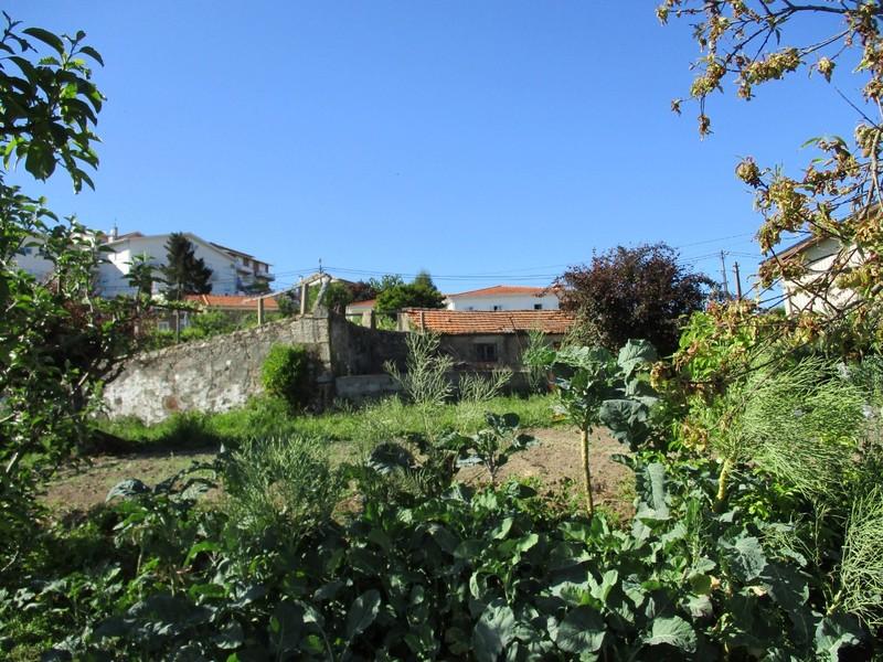 Terreno com 1100m2 Pinheiro Manso São Pedro de Castelões Vale de Cambra - tanque, água