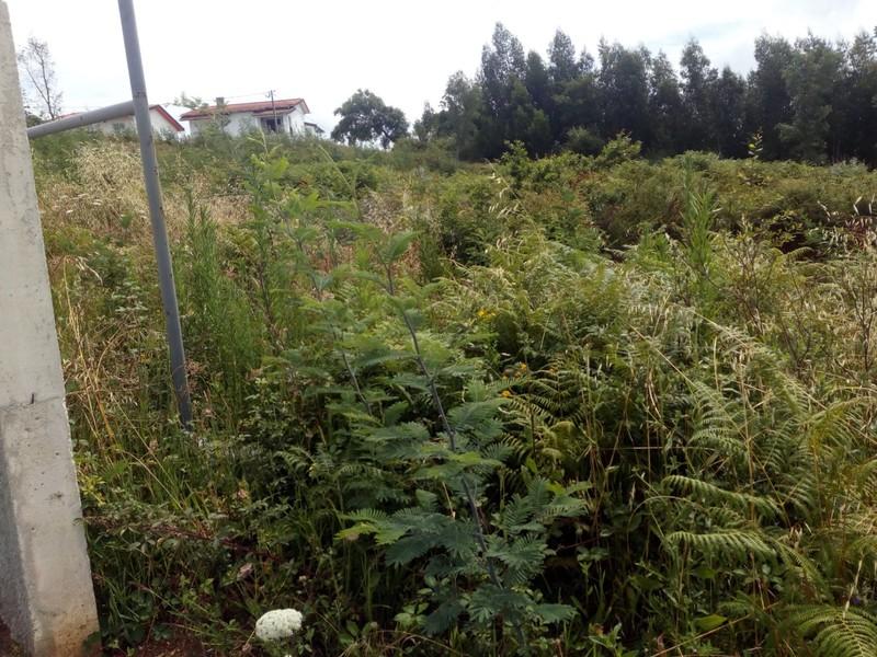 Plot of land with 440sqm Oliveira de Azeméis