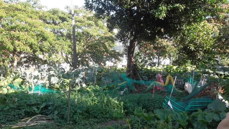 Casa V0 Oliveira de Azeméis - excelente localização