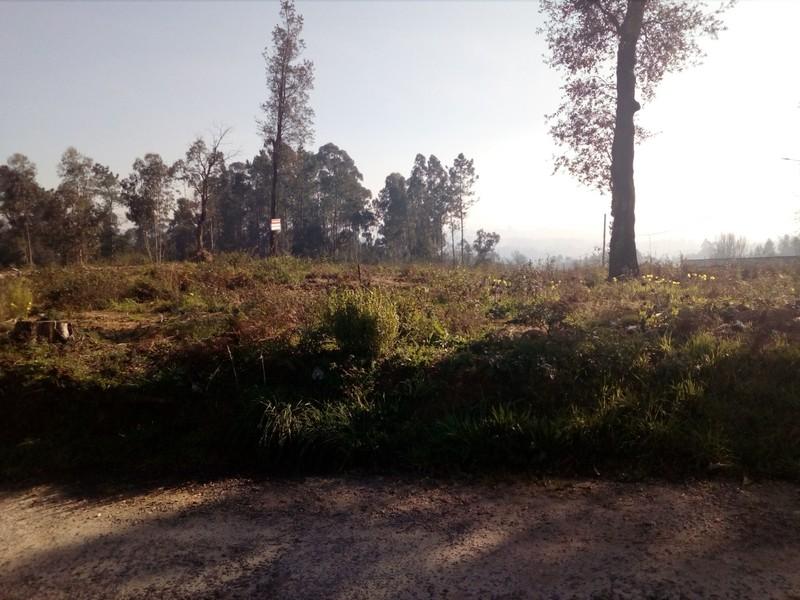 Terreno plano Vila de Cucujães Oliveira de Azeméis - bons acessos