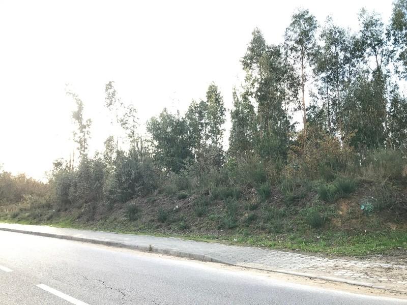 Terreno em zona habitacional São Roque Oliveira de Azeméis