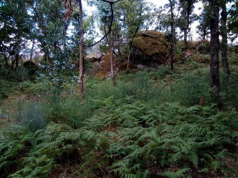 Land Rustic with 3730sqm Urgueira Valadares Baião