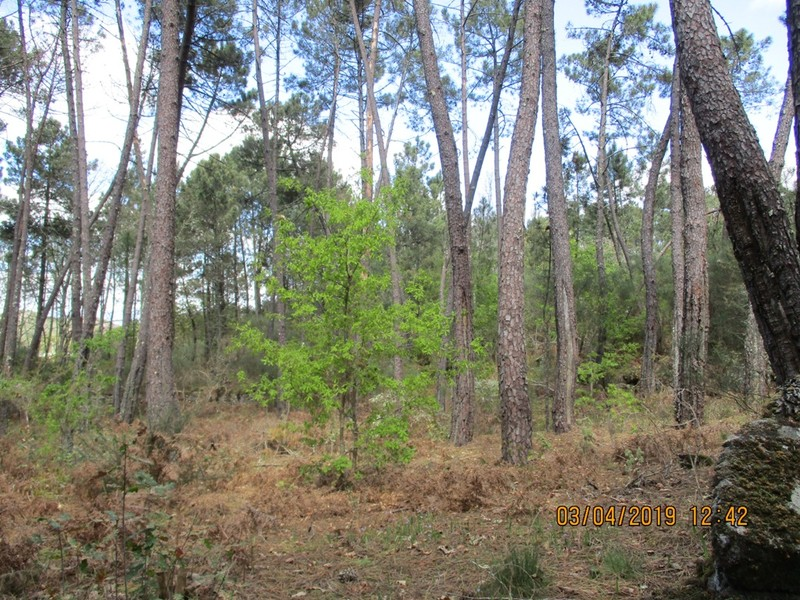Land Rustic with 220sqm Campo Viseu