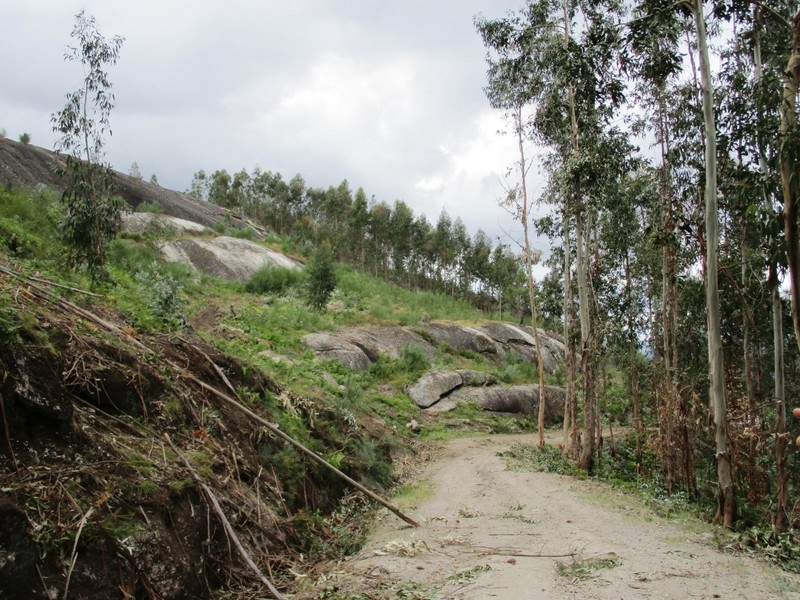 Terreno Rústico com 8070m2 Guilhofrei Vieira do Minho