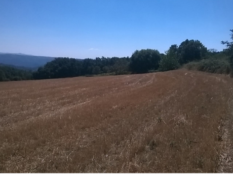 Terreno Rústico com 13145m2 Gavião Vilar de Ossos Vinhais