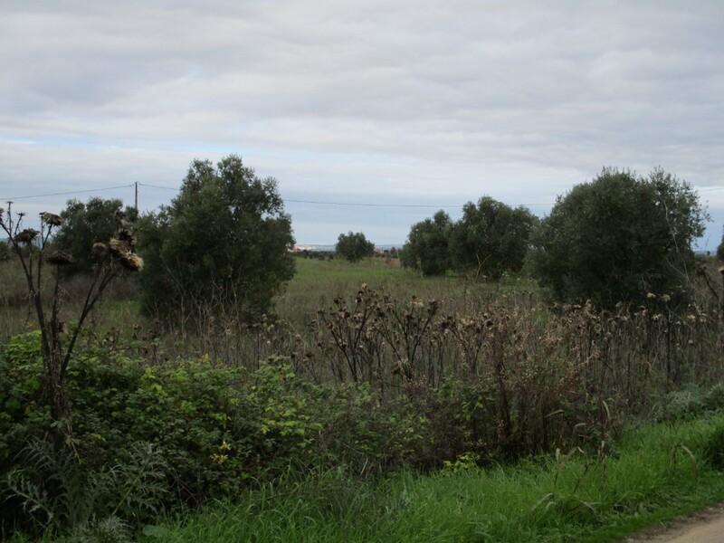 Terreno Rústico com 7680m2 Quinta de Vale de Flores Achete Santarém