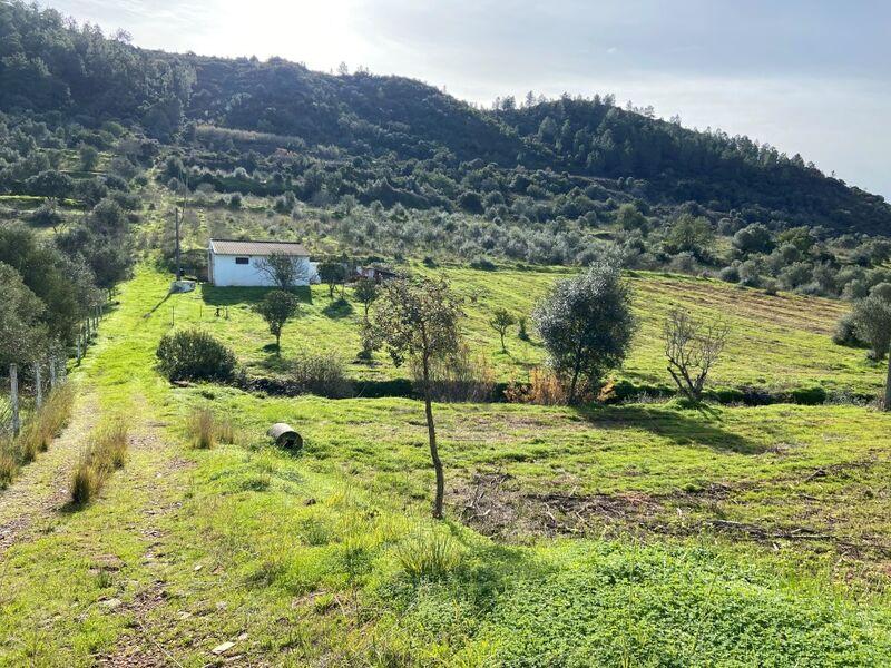 Terreno Rústico com 35500m2 São Bartolomeu de Messines Silves - furo