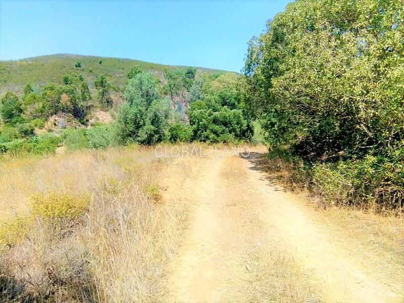 Terreno Rústico com 3000m2 Rasmalho Portimão - laranjeiras, electricidade, água de furo, excelentes acessos, cultura arvense, oliveiras, árvores de fruto