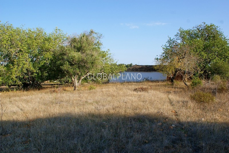 Farm V3 Estômbar Lagoa (Algarve) - arable crop, good access, olive trees, water