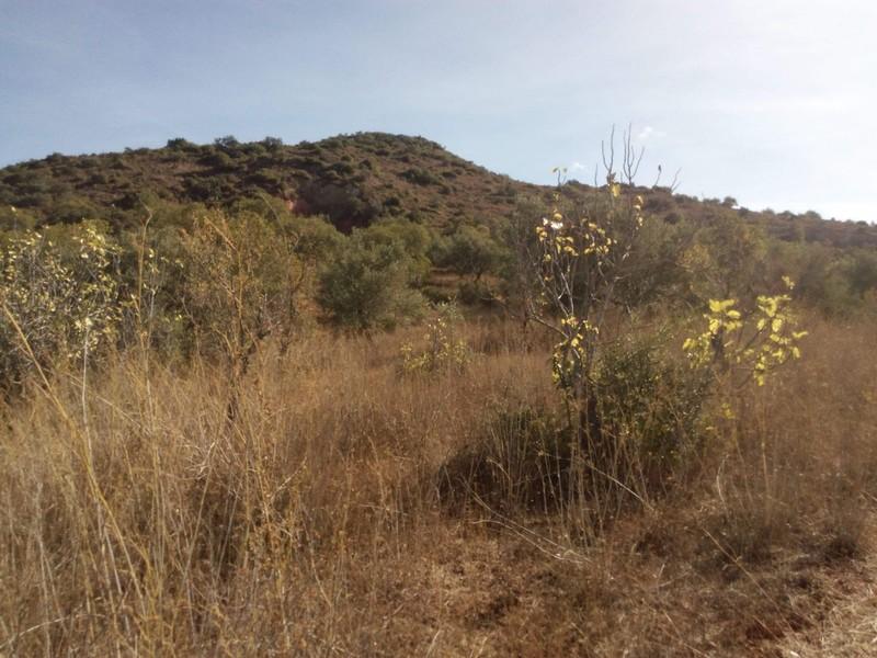 Terreno Rústico com 1472m2 Sitio dos Cordeiros São Bartolomeu de Messines Silves - bons acessos, oliveiras, electricidade, água, cultura arvense