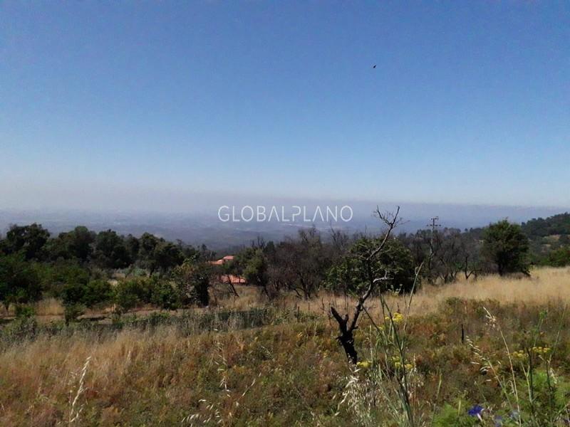 Terreno Rústico com 5880m2 Saramagal/ Monchique - cultura arvense, árvores de fruto, oliveiras, água