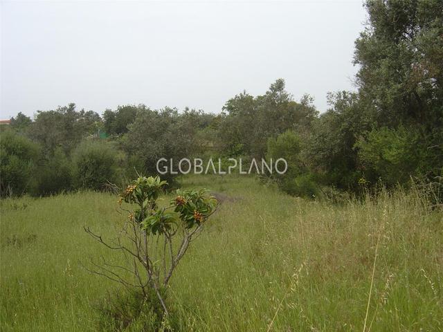 Lote de terreno Agrícola com 10820m2 Silves