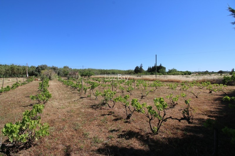 Land Rustic with 5440sqm Almádena Luz Lagos - fruit trees, well, water hole, olive trees, electricity