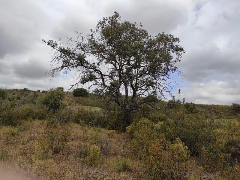 Terreno Rústico com 16880m2 Fonte Castro Marim - bons acessos