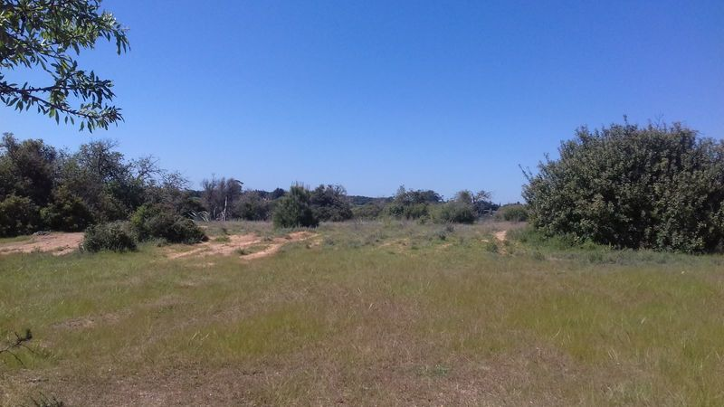 Land Rustic with 29580sqm Porches Lagoa (Algarve) - cork oaks, olive trees