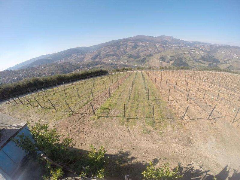 Farm V4 neues Penajóia Lamego - olive trees, water