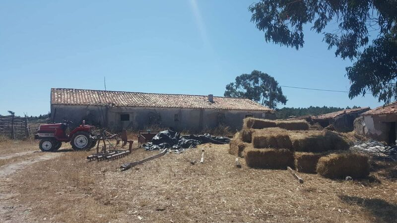 Farm V2 with ruin Odeceixe Aljezur - fruit trees, good access
