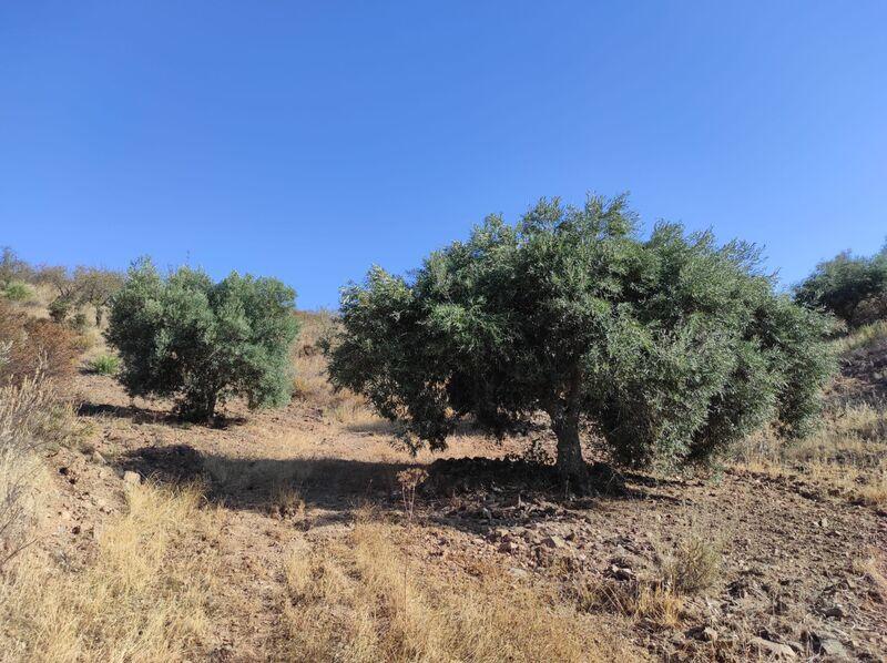 Terreno Rústico com 31200m2 Fernão Gil Odeleite Castro Marim - electricidade, oliveiras, bons acessos