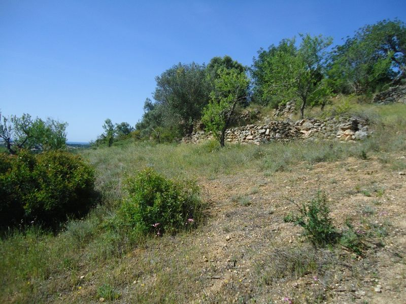 3 080 m²  Land plot in Albufeira