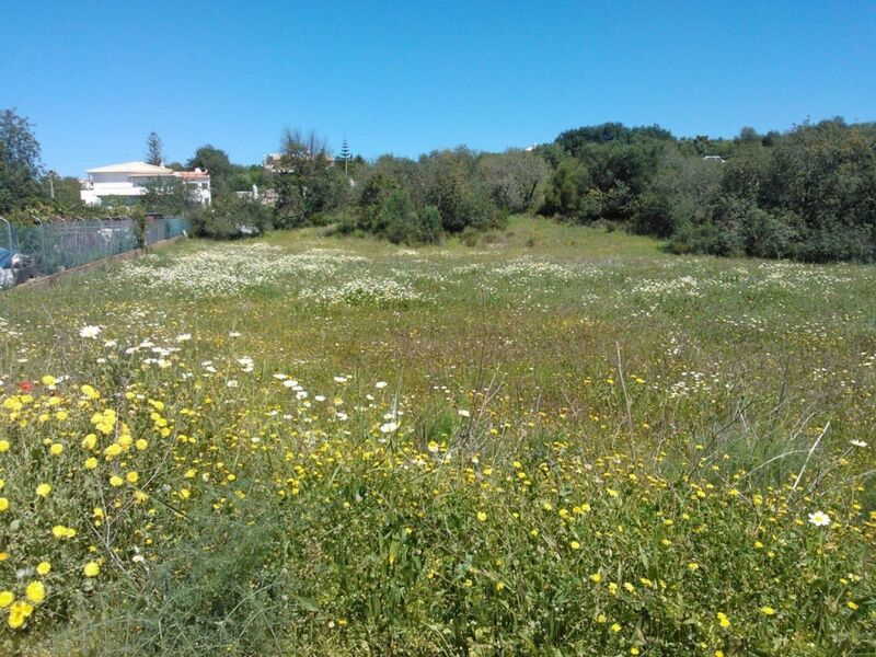 6000m2-Land-plot-for-sale-in-Loulé-Algarve