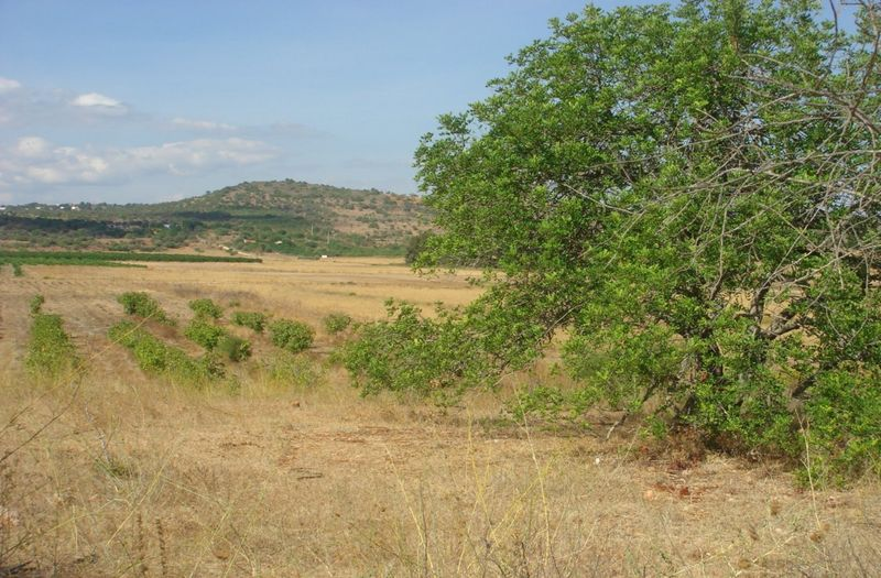 16364m2-Land-plot-for-sale-in-Silves-Algarve