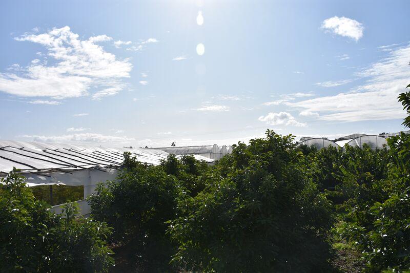 3 bedroom46440 m²  Land plot in Olhão