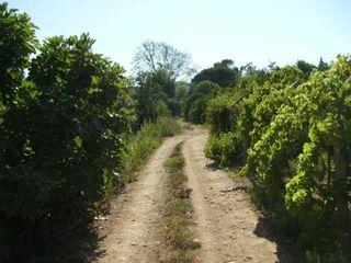Terreno Rústico com 7280m2 Silves - Odelouca - bons acessos, árvores de fruto